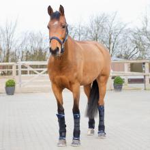 Horze Stable boots PRO, back - Imagen 1